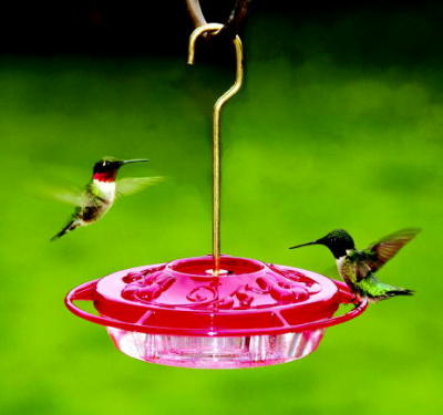 Hummingbirds on Decorative Feeder